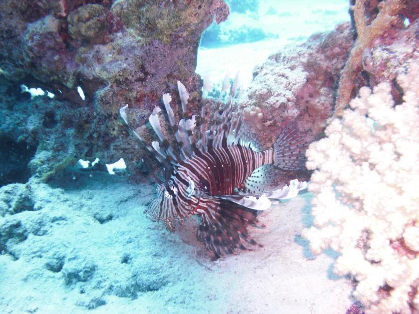 Testserie Unterwasserbilder, Ägypten