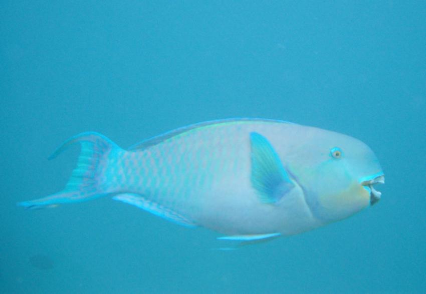 Sun Island (Süd Ari Atoll), Sun Island (Süd Ari Atoll),Malediven
