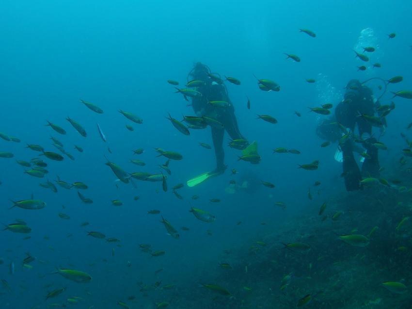Geheimtipp Diving Center Turtle Bay, Turtle Bay Dive Center, Watamu, Kenia