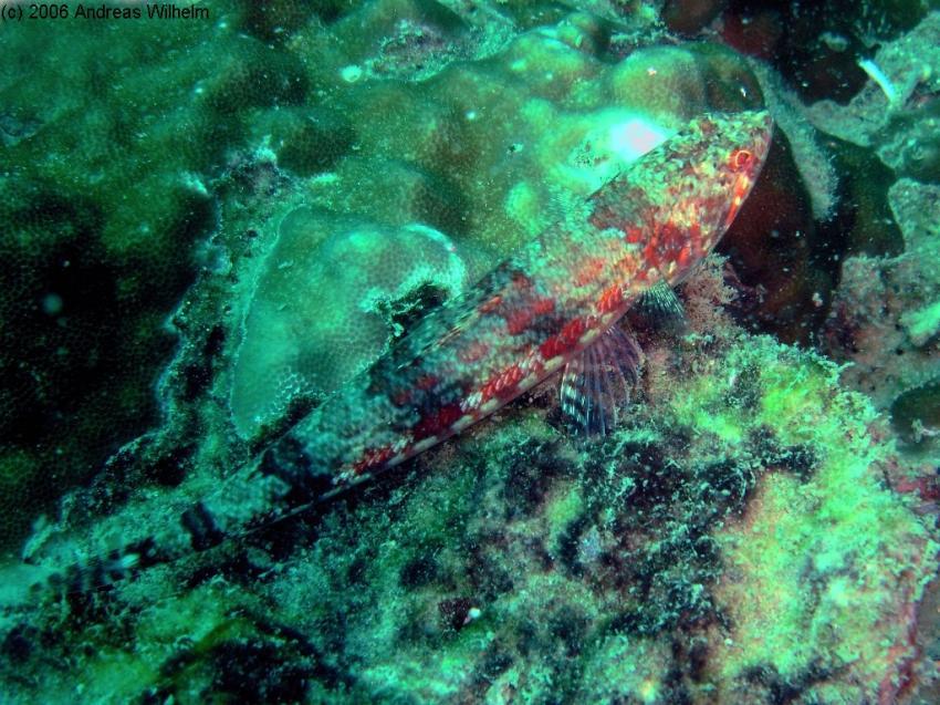 Phuket - Shark Point, Phuket - Shark Point,Thailand
