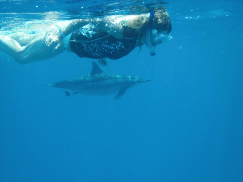Shaab Marsa Alam , Delfine, Sha´ab Marsa Alam,Ägypten,Delfin,Cetacea,Schnorchlerin