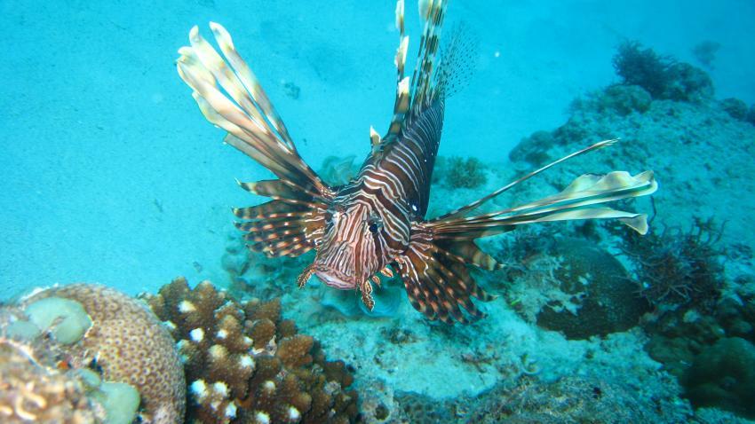 Merville Diving (Merville Hotel Gand Baie), Grand Baie,Mauritius
