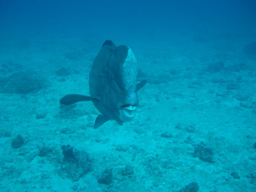 Ocean Dream Divers, Beau Vallon