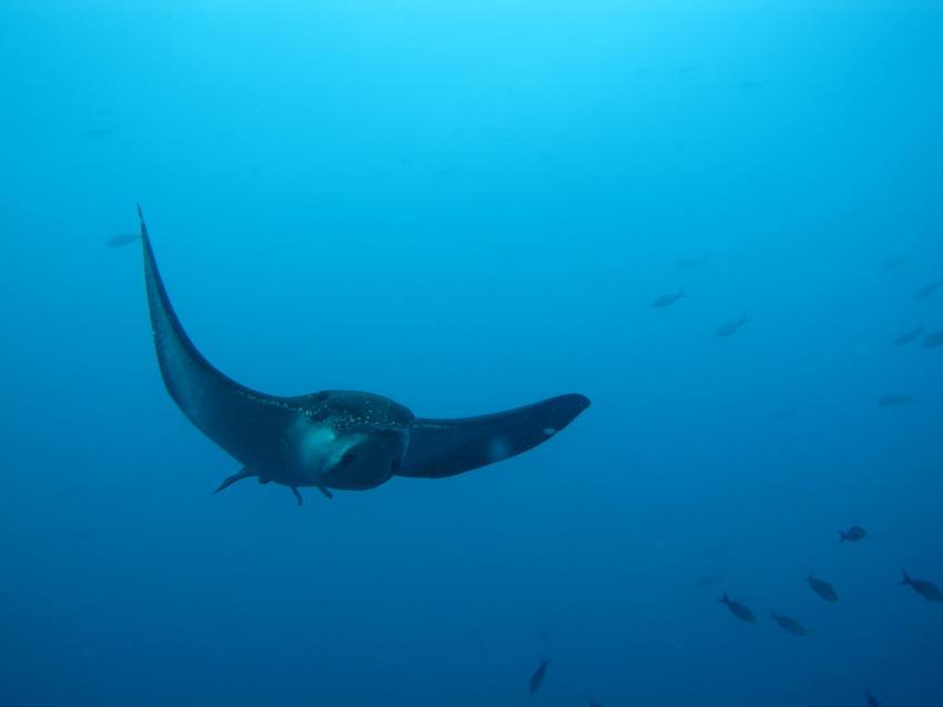 Galapagos Allgemein, Galapagos Allgemein,Galapagos,Ecuador,Adlerrochen