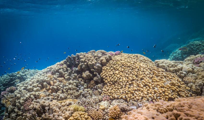 Scuba World Divers?Soma Bay_7, Tauchen in der Soma Bay, Scuba World Divers Soma Bay, Caribbean World Resort, Ägypten, Safaga