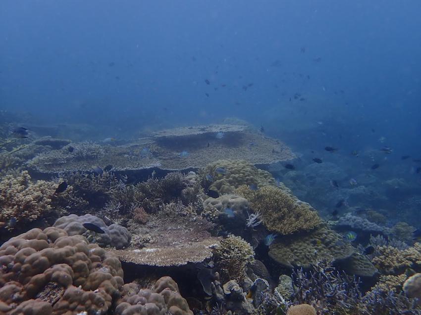 Tisch Korallen soweit das Auge reicht