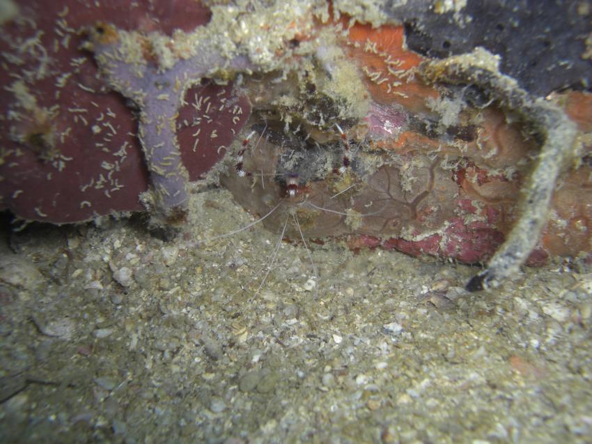 Ne kleine Krabbe, Pulau Perhentian,Malaysia