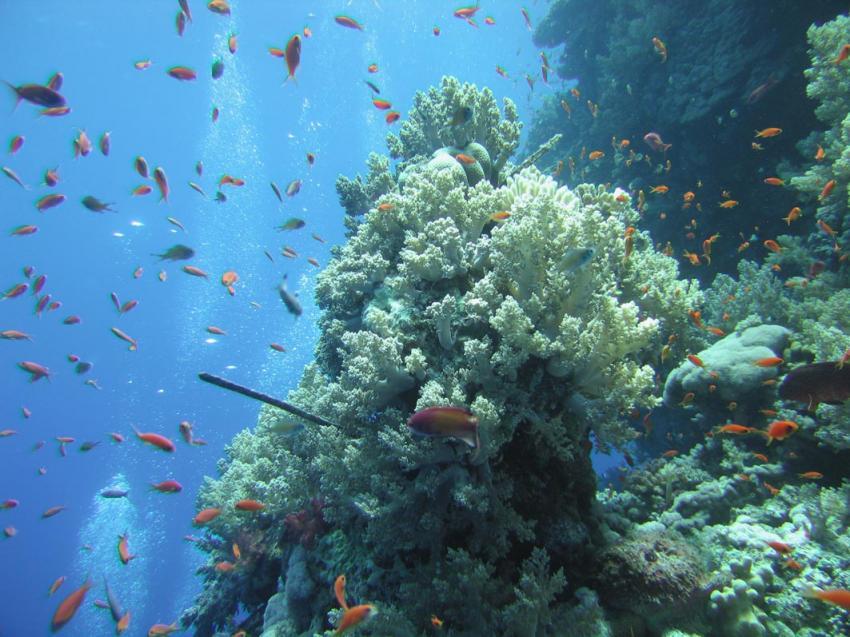 Daedalus Riff, Daedalus Riff,Ägypten