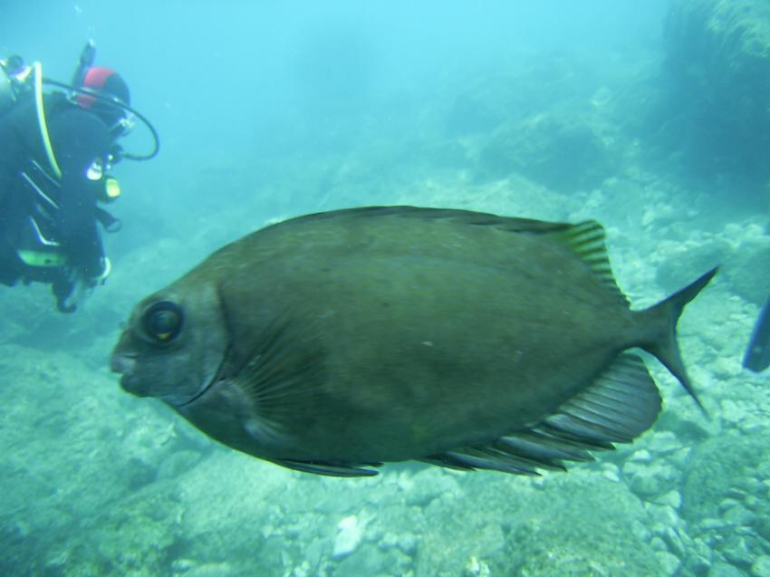 Arian Diving Center, Kos, Kardamena, Griechenland