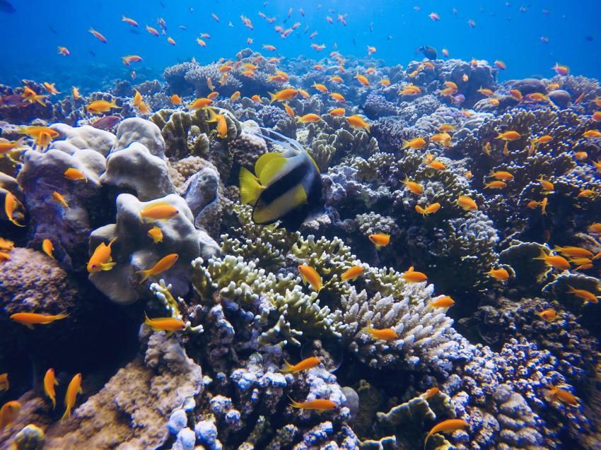 Scuba World Divers SuneoClub Reef Marsa_10, Tauchen Ägypten Marsa Alam, Scuba World Divers, SuneoClub Reef Marsa, Port Ghalib, Ägypten, El Quseir bis Port Ghalib
