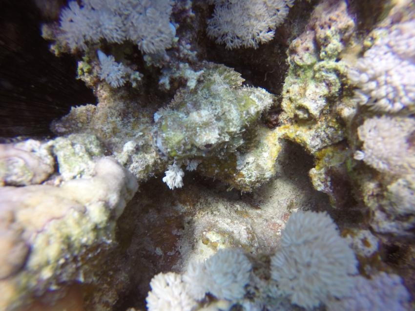 Drachenkopf, Wonderful Dive, Akassia LTI & Calimera, Ägypten, El Quseir bis Port Ghalib