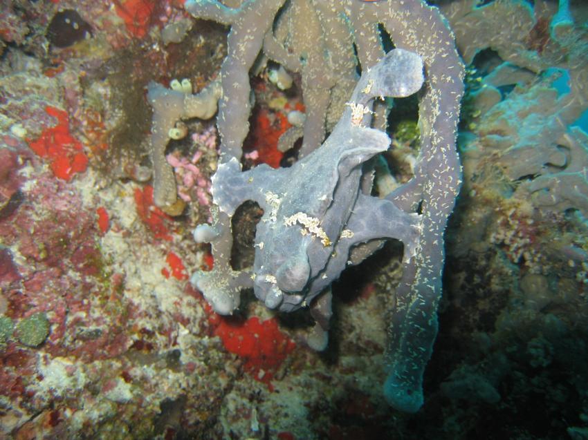 Anglerfisch mit Blick zum Riff.....:-)