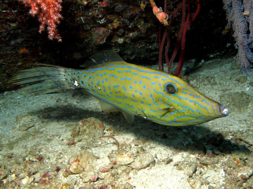 Filen Fish