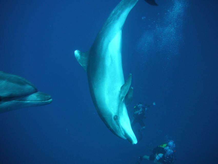 Los Gigantes marina
