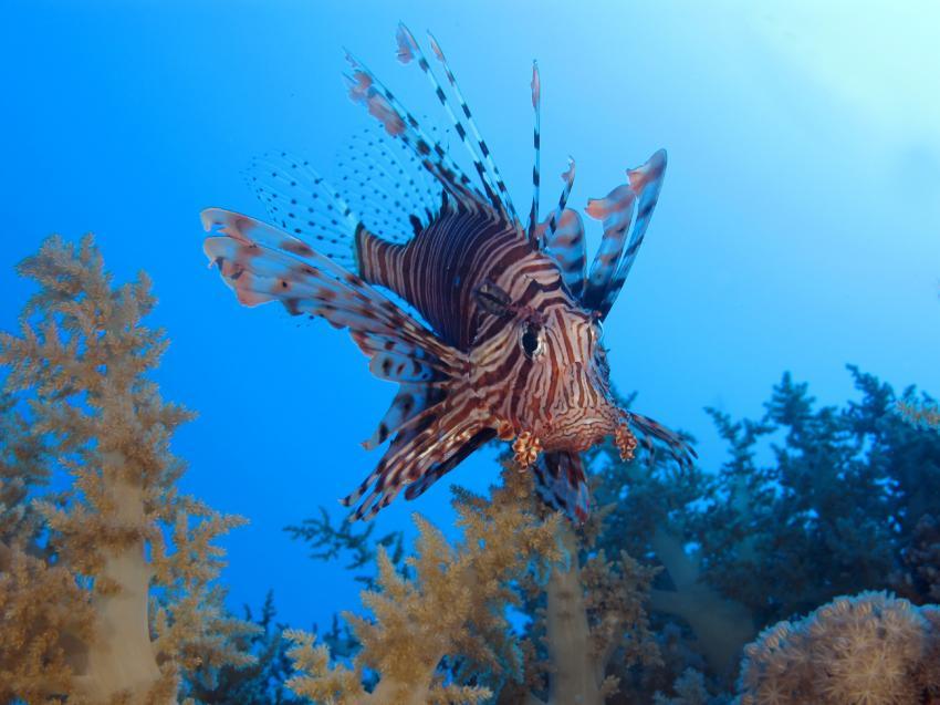 SimSim Dive, Ägypten, Hurghada