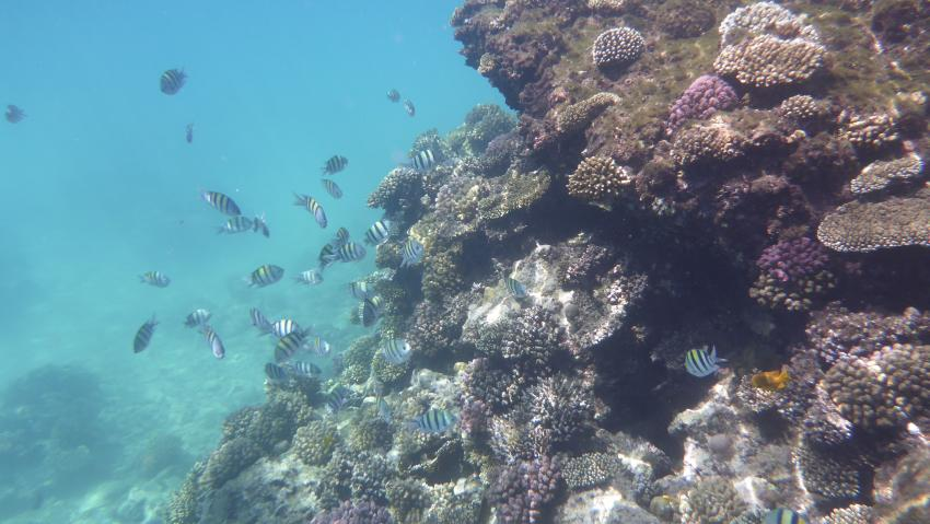 Extra Divers - Sahl Hasheesh , Ägypten, Hurghada