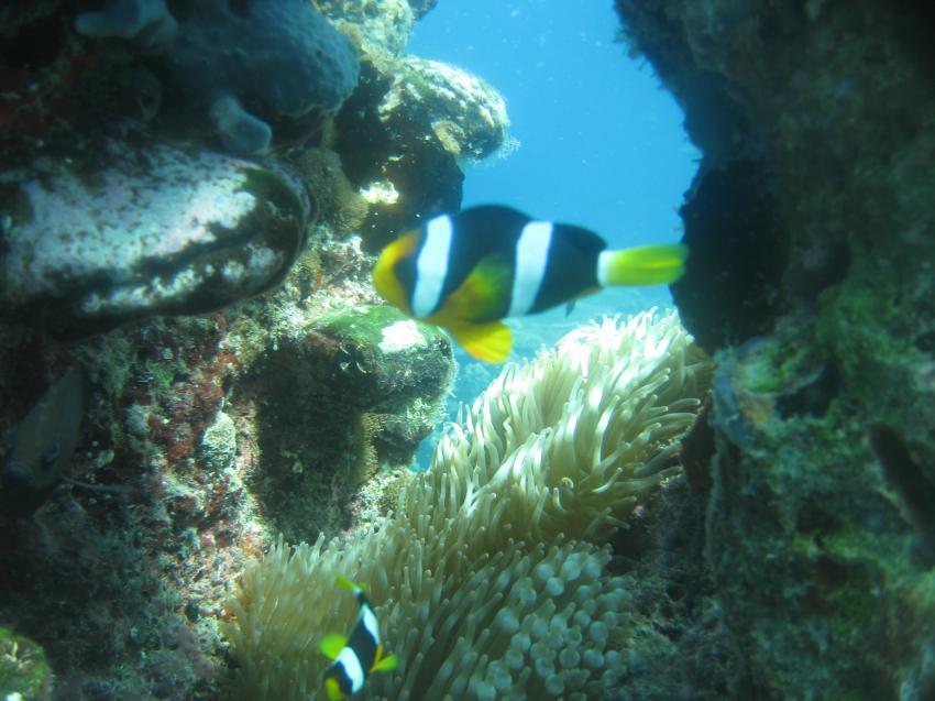 Gasfinolhu, Gasfinolhu,Malediven