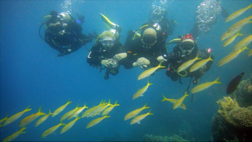 Scuba_World_Divers_Marsa_Alam_4, Tauchen in Marsa Alam, Scuba World Divers Marsa Alam, Lagoon View Resort, Ägypten, El Quseir bis Port Ghalib