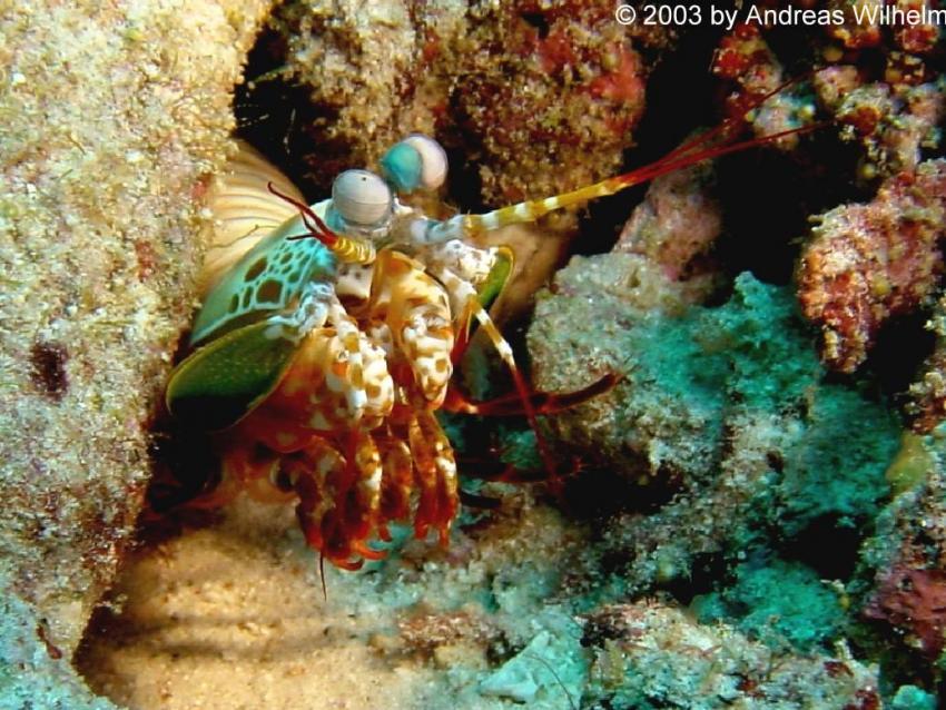 Racha Yai - Lucie's Reef, Racha Yai - Lucie's Reef,Thailand