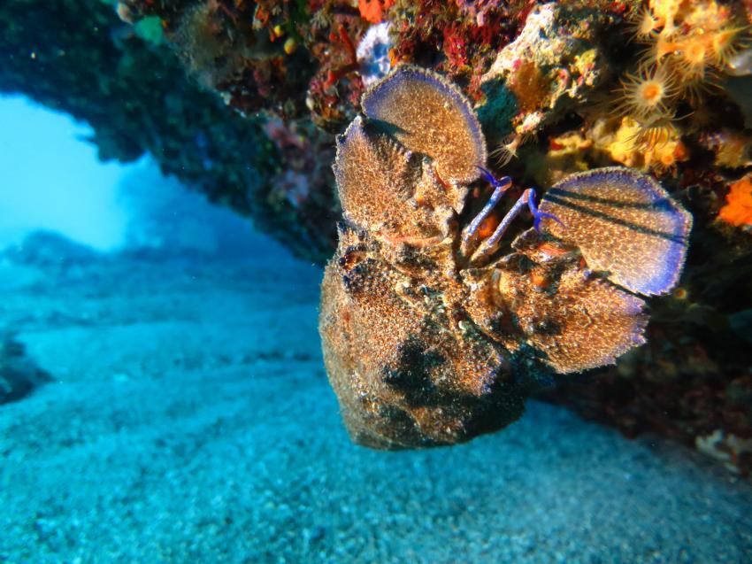 BLU INFINITO Diving Center, Capo Coda Cavallo, Sardinien, Italien