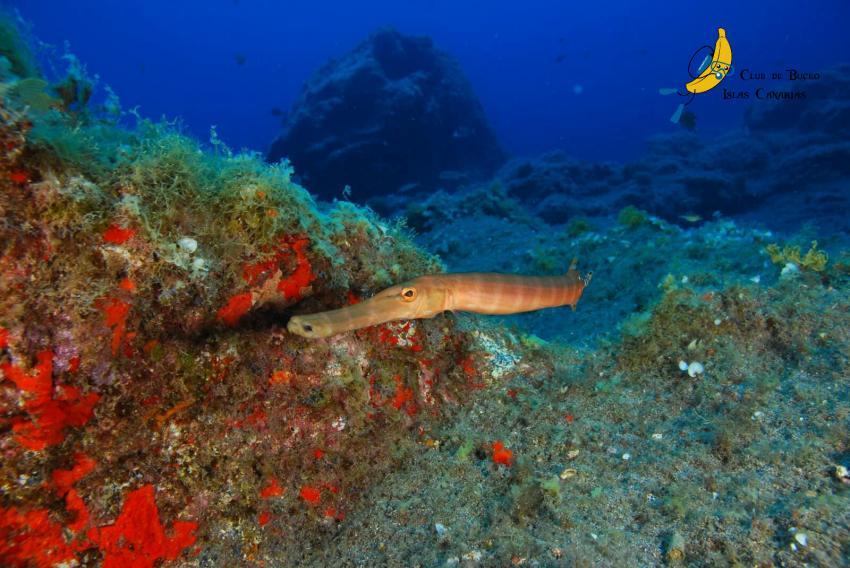 Boca Cangrejo, Teneriffa, Spanien, Kanarische Inseln
