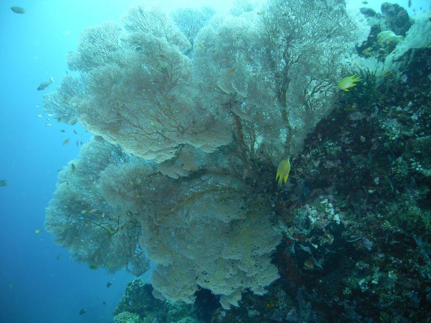 Urlaub 2010, Allgemein,Indonesien