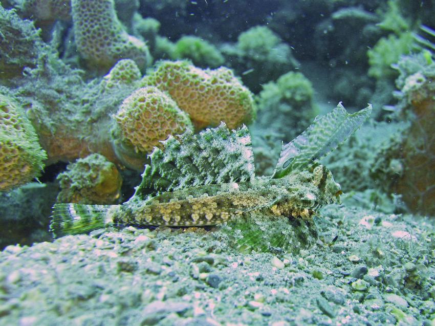 Dili und Umgebung, Dili und Umgebung,Osttimor