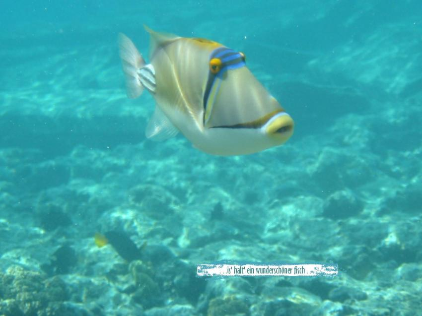 Sharm el Sheikh - Sharks Bay, Strasse von Tiran,Shark Bay - Sharm el Sheikh,Ägypten