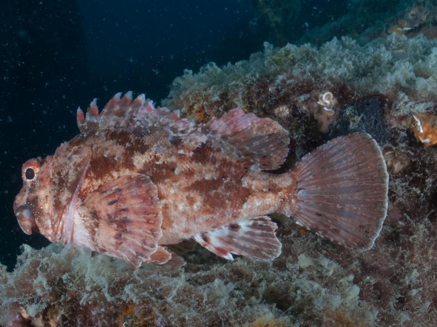Drachenkopf, Styria Guenis Diving Center, DIE Tauchbasis auf der Insel Krk, DIE Tauchbasis auf der Insel Krk, Styria Guenis Diving Center, Kroatien