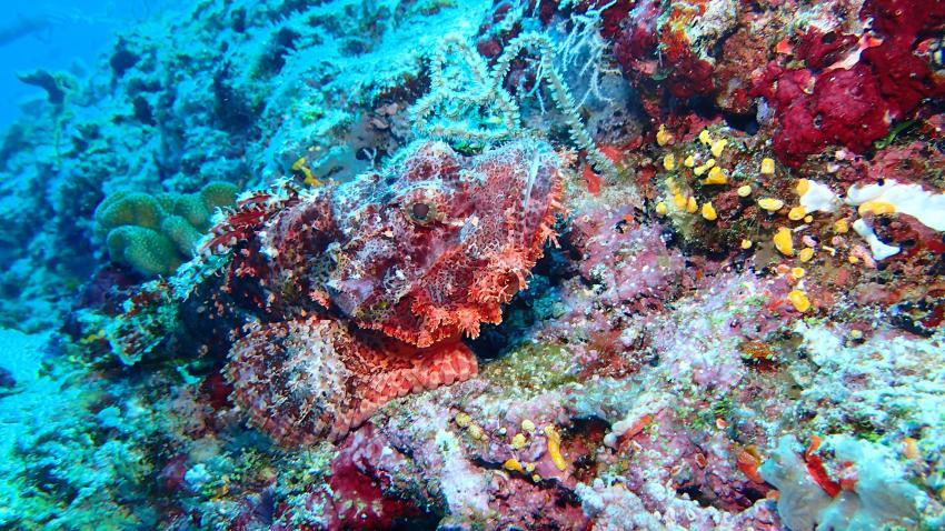 Himandhoo (Ari Atoll), Himandhoo,Malediven