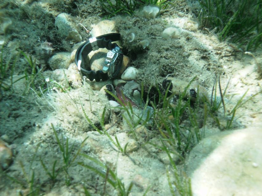 Oktopus, Chalkidiki,Griechenland,Taucheruhr,unter Wasser verloren