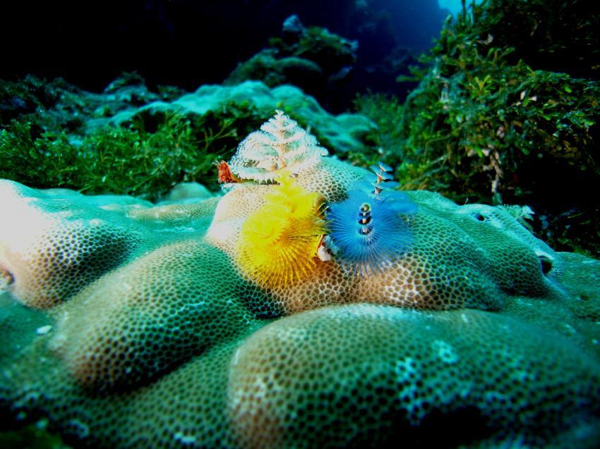 Blue Corner, Blue Corner,Palau