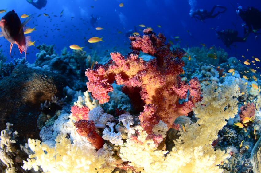 Scuba World Divers Marsa Alam_6, Tauchen in Marsa Alam, Scuba World Divers Marsa Alam, Lagoon View Resort, Ägypten, El Quseir bis Port Ghalib