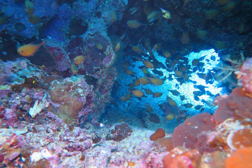 Soma Bay_10, Tauchen Ägypten Soma Bay, Scuba World Divers Soma Bay, Caribbean World Resort, Ägypten, Safaga