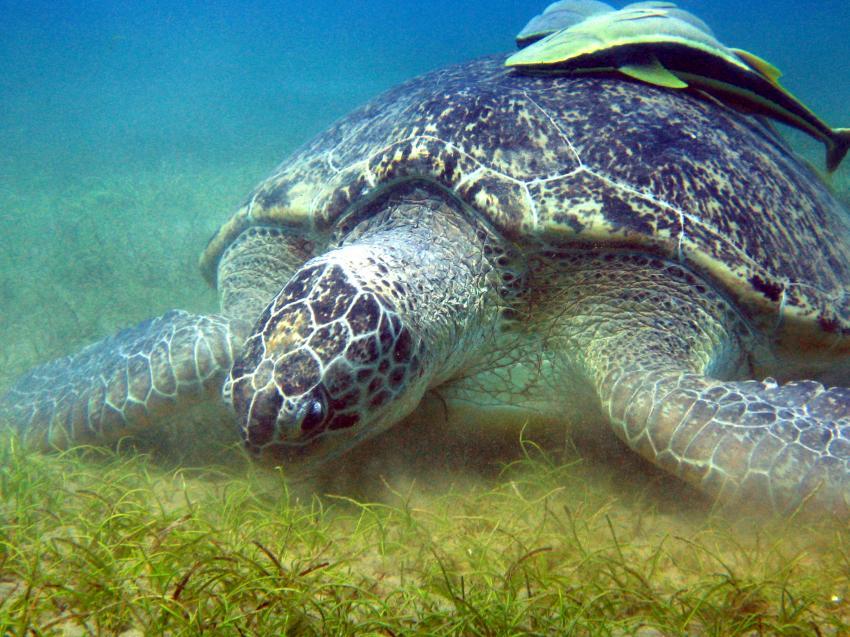 Matthes Reef Divers, Resta Reef Resort, Marsa Alam