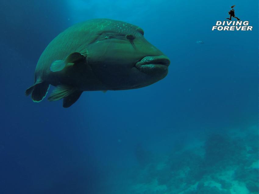 Hurghada Tauchen, Hurghada Tauchen, Diving Forever Hurghada, Ägypten, Hurghada