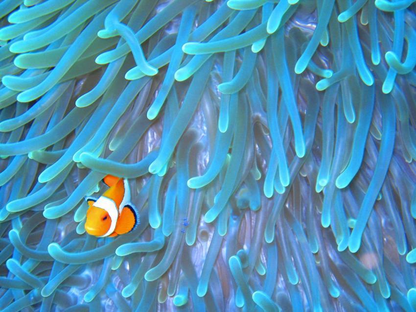 Wakatobi Diveresort Südost-Sulawesi, Wakatobi,Sulawesi,Indonesien
