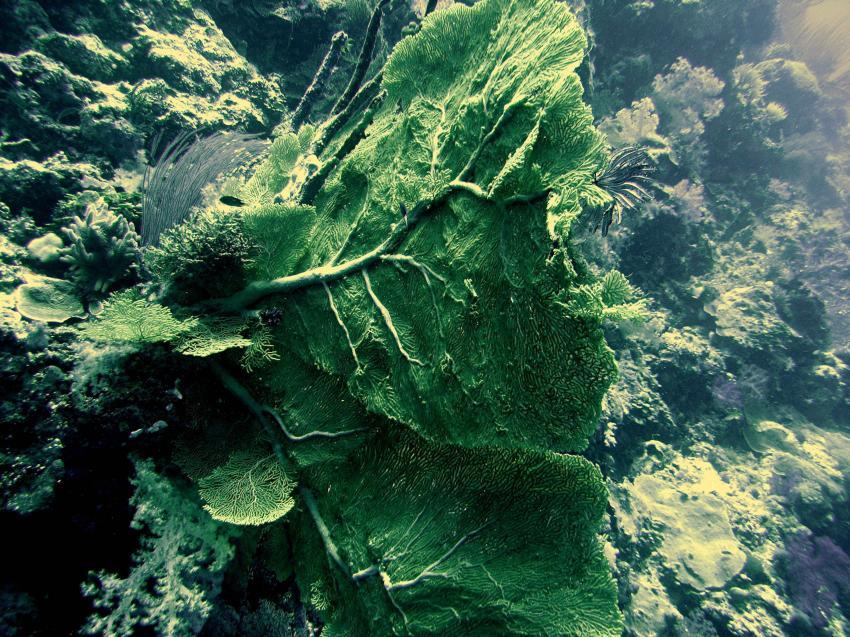 Blue Hole und New Drop Off, Blue Hole und New Drop Off,Palau