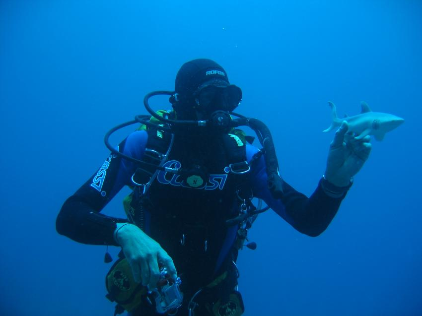 Teneriffa- Südliche Küste, Teneriffa,Spanien,Teneriffa- Südliche Küste,taucher,hai,spielzeug