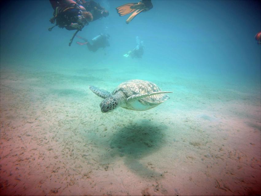 Scuba_World_Divers_Marsa_Alam_2, Tauchen in Marsa Alam, Scuba World Divers Marsa Alam, Lagoon View Resort, Ägypten, El Quseir bis Port Ghalib