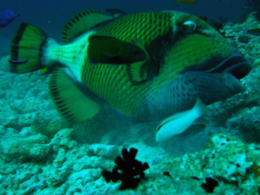 Ari Atoll - Kalu Giri, Ari Atoll,Malediven