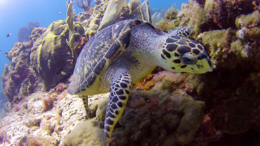 Unterwasser mit ScubaCaribe, ScubaCaribe Cancun - RIU Hotels, Mexiko