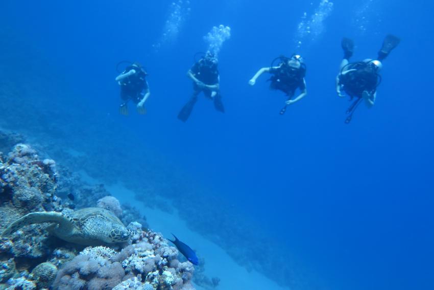 Scuba World Divers Hausriff Makadi Bay_3, Tauchen Ägypten Makadi Bay, Scuba World Divers Makadi Bay, Ägypten, Hurghada