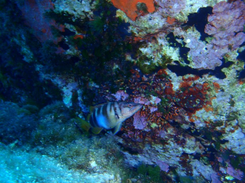 Costa Paradiso Diving Center (Sardinien), Italien, Sardinien