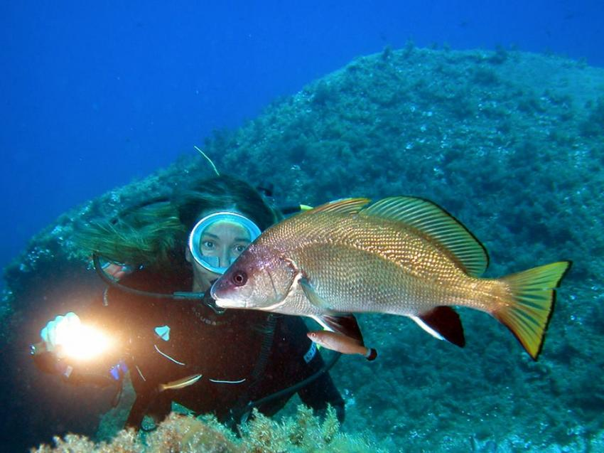 CorbFish, Orso Diving Club (Sardinien), Italien, Sardinien