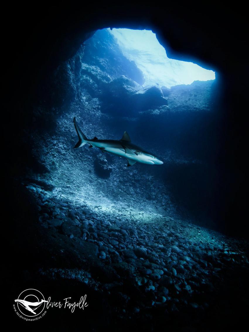 Hai Tauchen in Mauritius, Haie, Tauchen, Mauritius, TEC Diving Mauritius