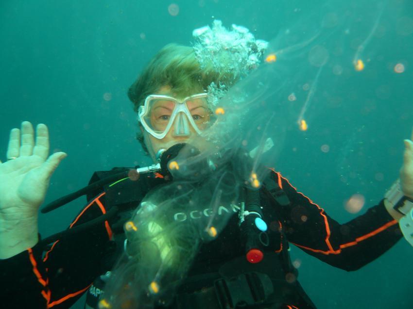 Barbara und das unbekannte Lebewesen, Meemu Atoll,Malediven