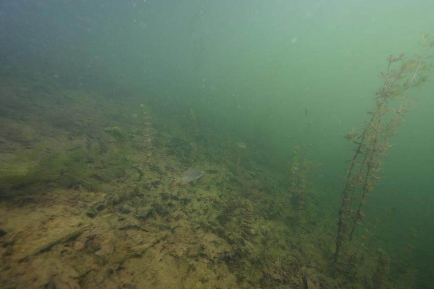 Ein paar Schnorchelbilder vom Alberssee, Alberssee Lippstadt-Mettinghausen,Nordrhein-Westfalen,Deutschland