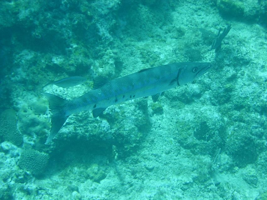 Tauchen mit Dive-Samana, Las Galeras, SAMANA - Las Galeras,Dominikanische Republik