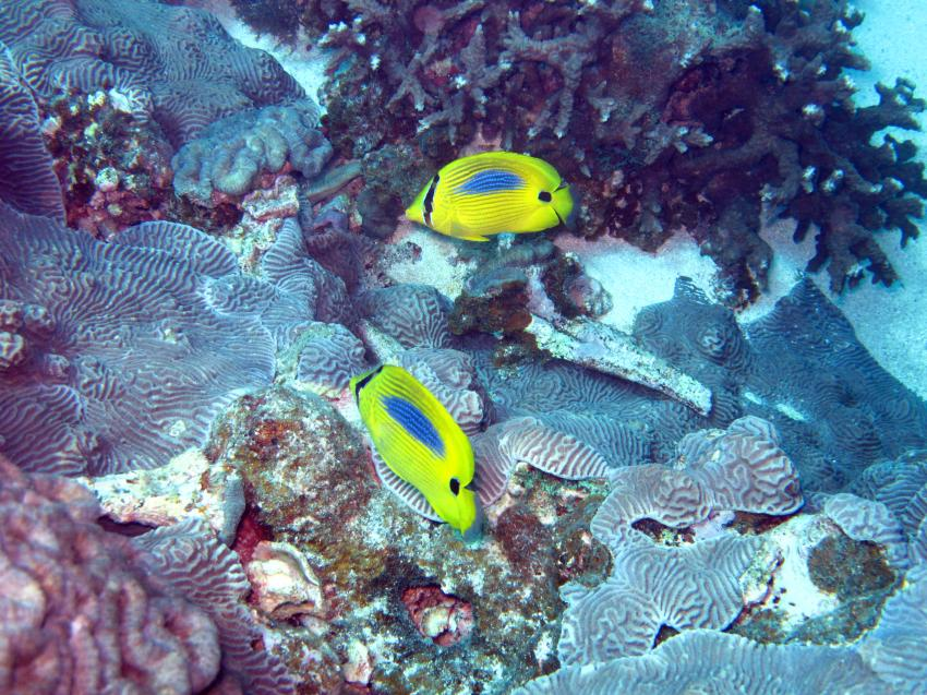 Coral Bay WA, Coral Bay WA,Australien